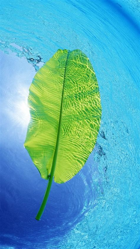wallpaper for iphone leaves blue water green leaf iphone 6 wallpaper iphone