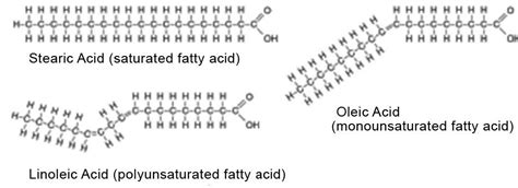 healthy fats chemistry image gallery saturated lipids
