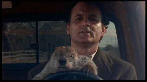 groundhog day with bill murray bill murray 233 t 227 o foda que at 233 parece mentira vip