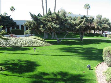 complete landscaping tucson lawn care grounds maintenance complete landscaping
