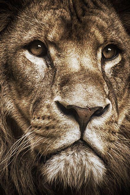 Hochzeitseinladung Lions by 258 Besten Interest Bilder Auf Animal Kingdom