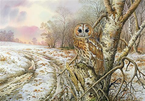 Best Home Decor Blog by Tawny Owl Painting By Carl Donner