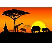 Our Most Trending Wallpapers Of Whole Africa
