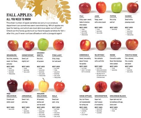 apple varieties fall apples nugget markets daily dish