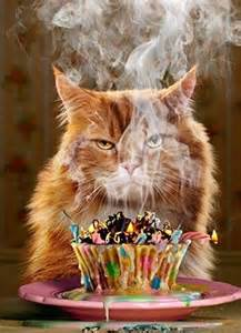 25 best ideas about happy birthday cats on happy birthday cat images cat happy