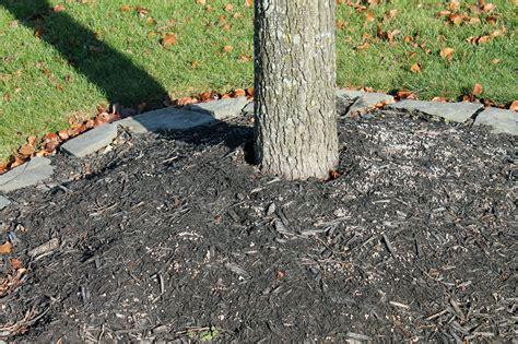 tree trunk l base trees in trouble garden housecalls