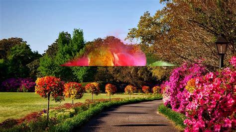 beautiful nature images hd nature beautiful flowers
