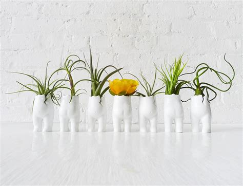 Flower Vase Decoration Home by Tushiez Terrarium Matte Or Glossy Air Plant Holder