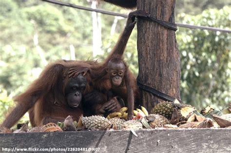 per dps flight schedule samboja orangutan 3 days 2 nights valid minimum for 02