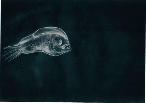 deep sea anglerfish by eurwentala on deviantart deep sea anglerfish drawing