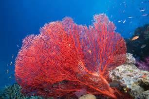 inspiration le corail bright