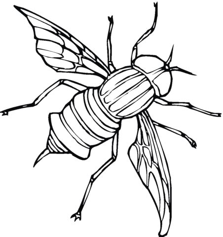Fly 5 Coloring Page Supercoloring Com Fly Coloring Page