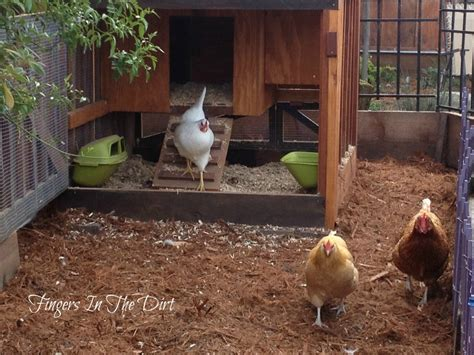 Backyard Chicken Blogs How To Build A Chicken Coop In The City Abiel Storage