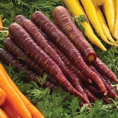 colored carrots purple elite f1 carrot seed johnny s selected seeds