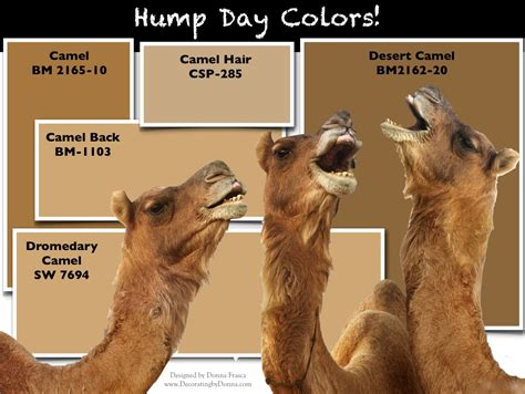 what color is camel it s hump day is camel an color decorating by