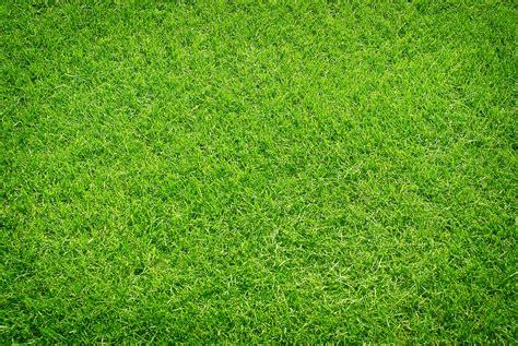 Der Perfekte Rasen by Das 1 215 1 F 252 R G 228 Rtner Der Perfekte Rasen 187 Hilfe Im Netz