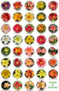 Flower name chart http www nhgarden com notes p 635