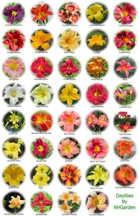 Garden Flower Names List Flower Names Weneedfun