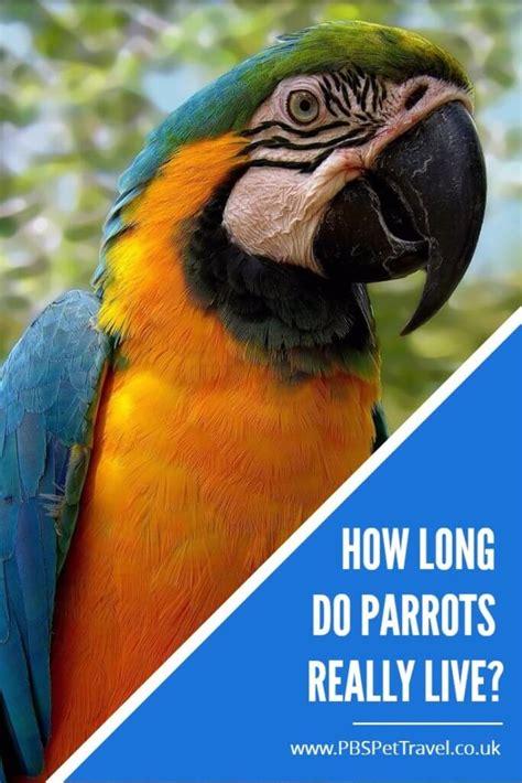 parrot lifespans how long do parrots live for pbs pet travel