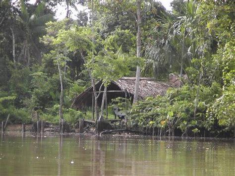suche hauskäufer haus am ufer bild orinoco river orinoco delta