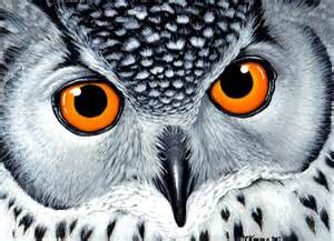owl paintings galleryhip com the hippest galleries