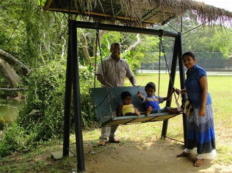 swing village swing picture of chaaya village habarana habarana
