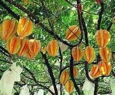 fruit bushes and trees on pinterest fruit trees - Marmalade Trash Boat Lyrics