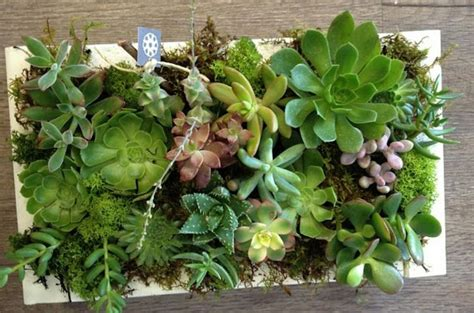 decorar con plantas suculentas 4 ideas de decoraci 243 n con suculentas plantas