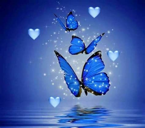 imagenes de mariposas moradas y azules mejores 92 im 225 genes de mariposas azules y algo m 225 s en