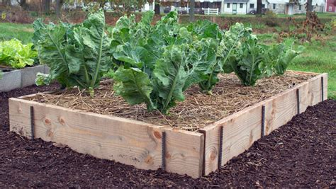 Easy Garden Bed Ideas 10 Easy Raised Bed Garden Ideas To About For Green Living Ideas
