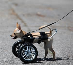 wheel chairs for dogs wheelchairs for dogs built quality by ruff rollin