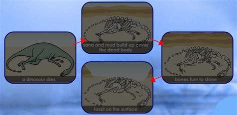 how fossils are formed diagram how are fossils formed diagram 28 images fossils