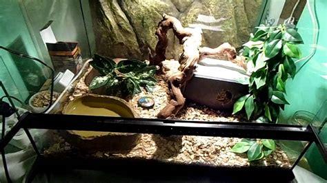 terrarium le pr 233 sentation serpent des bl 233 s le terrarium