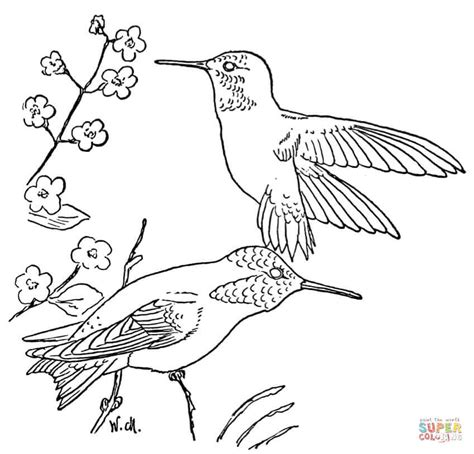 coloring pages with hummingbirds rufous hummingbird coloring page free printable coloring