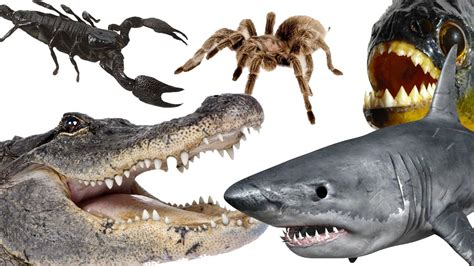 Top 10 Most Dangerous Animals by Top 10 Most Dangerous Animals In The World