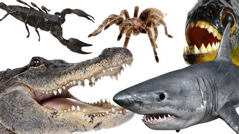Galerry 10 most dangerous animals