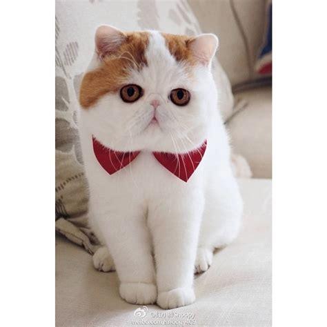 Boneka Kucing Imut Lucu Terbaru 50 gambar dp bbm kucing lucu imut gemesin berbagai gadget