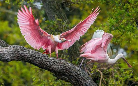pink wallpaper with birds pink birds hd birds 4k wallpapers images backgrounds
