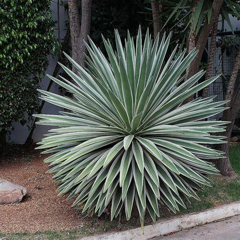 Plante Pour Jardin Sec by Des Id 233 Es De Plantes Et D Am 233 Nagements Pour Un Jardin Sec