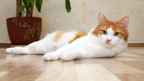Cat In House by Moving House With Your Cat Cat Advice Purina