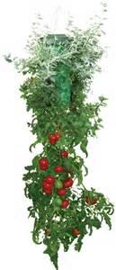 Container Gardening Blog - apartment dwellers can grow fresh veggies too montrose square apartmentsmontrose square