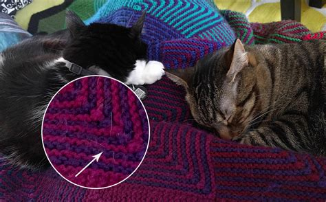 knitting with cat hair pets things the cat hair edition knitpicks staff