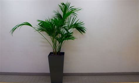 plantas de interior sin luz plantas para decorar un hall sin luz natural decogarden