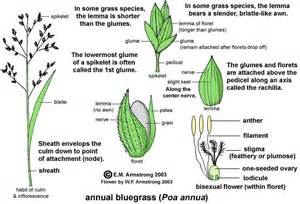 Identifying Trees By Their Flowers - bamboo