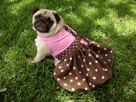 pug in dress dating advice how to date a single should you
