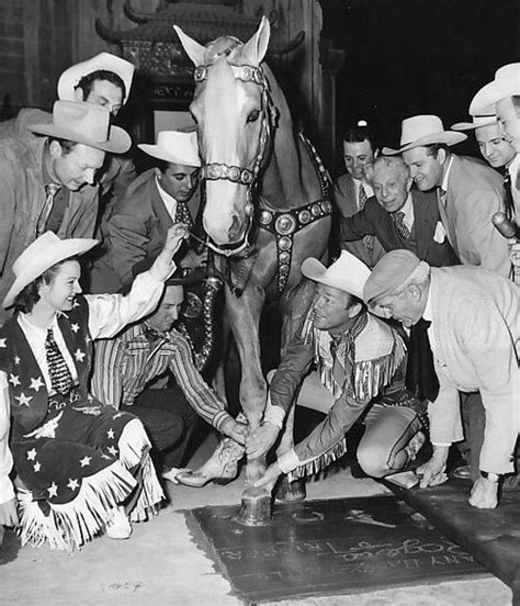 17 best images about horses on velvet western and war horses