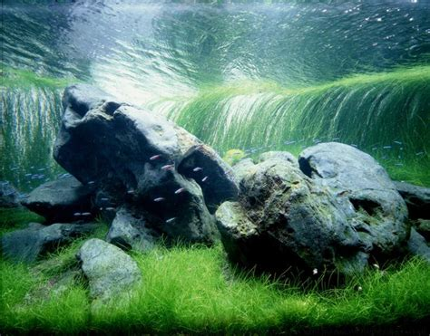 takashi amano aquascape another takashi amano iwagumi aquascaping pinterest
