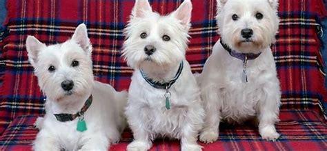 perro para piso peque o mascotas para un piso hogar y ideas de dise 241 o doxko co