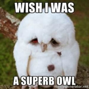 Owl Birthday Meme - image gallery owl pun memes