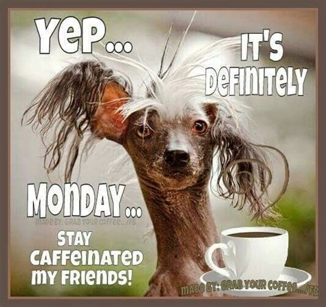 Monday Coffee Meme - best 25 monday morning coffee ideas on pinterest monday